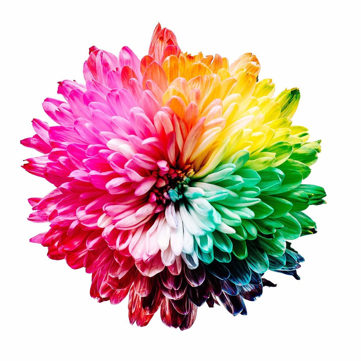 La beauté d'une fleur multicolore