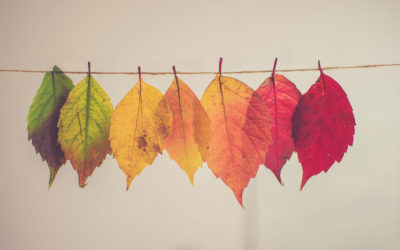 Rien ne se perd, tout se transforme.