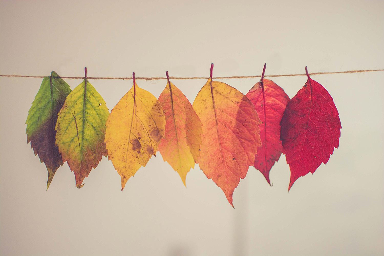 photo de toutes les variations de la couleur d'une feuille d'arbre