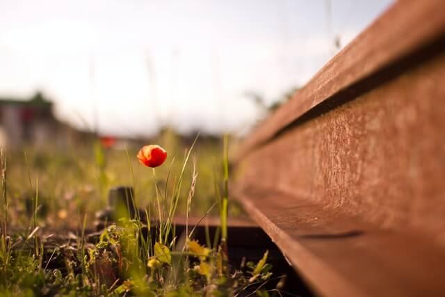 un coquelicot qui pousse aux abords d'une voie ferrée